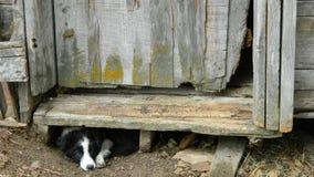 Perro del país Foto de archivo