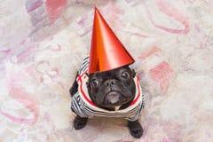 Perro del partido Fotografía de archivo