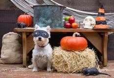 Perro del partido de Halloween Imagen de archivo libre de regalías