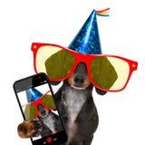 Perro del partido del feliz cumpleaños fotografía de archivo