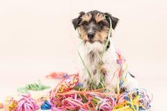 Perro del partido Jack Russell listo para el carnaval imagen de archivo
