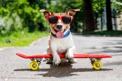 Perro del patinador en el monopatín Fotos de archivo