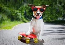 Perro del patinador en el monopatín Imagen de archivo libre de regalías