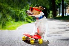 Perro del patinador en el monopatín Imagen de archivo