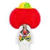Perro del payaso con la peluca y el sombrero rojos Imagen de archivo