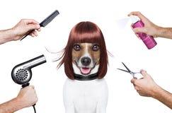 Perro del peluquero Imágenes de archivo libres de regalías