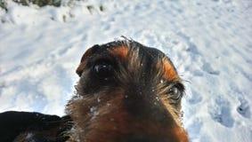 Perro del perrito del perro Foto de archivo libre de regalías
