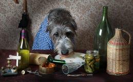 Perro del perro lobo irlandés en la tabla Fotos de archivo libres de regalías