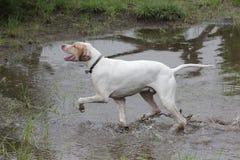 Perro del prado Imagenes de archivo