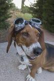 Perro del punky del vapor Foto de archivo