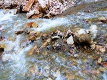 Perro del río fotografía de archivo libre de regalías