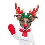 Perro del reno foto de archivo