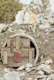 Perro del rescate Imagen de archivo libre de regalías