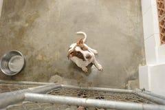 Perro del rescate Foto de archivo