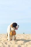 Perro del rescate con el barril Fotografía de archivo libre de regalías
