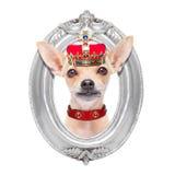 Perro del rey de la corona fotos de archivo