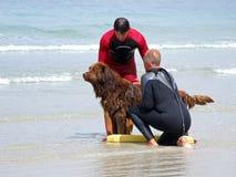 Perro del salvavidas Imágenes de archivo libres de regalías