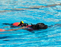 Perro del salvavidas Fotos de archivo