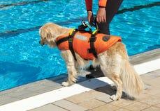 Perro del salvavidas Foto de archivo libre de regalías