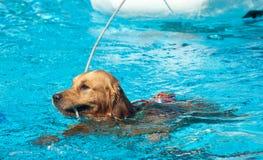 Perro del salvavidas Imagen de archivo libre de regalías