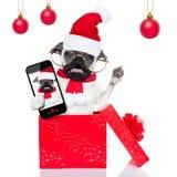 Perro del selfie de la sorpresa de la Navidad Imagen de archivo libre de regalías