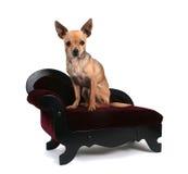 Perro del sofá Imagenes de archivo