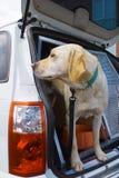 Perro del succionador Fotografía de archivo libre de regalías