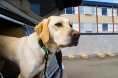 Perro del succionador Foto de archivo libre de regalías