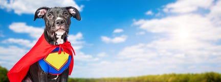 Perro del super héroe con el fondo del cielo azul Fotos de archivo libres de regalías