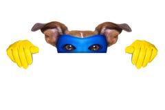 Perro del superhéroe Fotografía de archivo libre de regalías