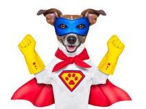 Perro del superhéroe Imagen de archivo libre de regalías