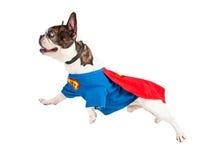 Perro del superhéroe que vuela sobre blanco Imagenes de archivo