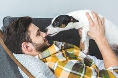 perro del terrier de Russell del enchufe que lame la cara de imagen de archivo libre de regalías