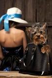 Perro del terrier de Yorkshire en bolso Foto de archivo libre de regalías