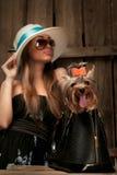 Perro del terrier de Yorkshire en bolso Fotos de archivo