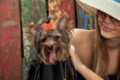 Perro del terrier de Yorkshire en bolso y mujer Imágenes de archivo libres de regalías