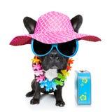 Perro del verano del día de fiesta Imágenes de archivo libres de regalías