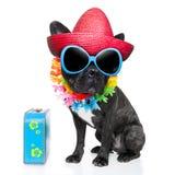 Perro del verano del día de fiesta Imagen de archivo libre de regalías