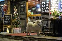 Perro delante del café de la ciudad vieja del La de Shangri, Xianggelila, Zhongdian, de la provincia de Yunnan, cerca de Tíbet, C fotos de archivo