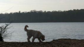 Perro delante del mar Foto de archivo libre de regalías