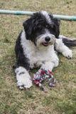 Perro desaliñado Imágenes de archivo libres de regalías