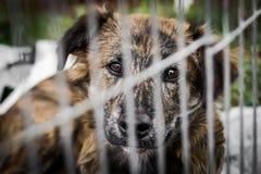 Perro detrás de barras Fotografía de archivo libre de regalías