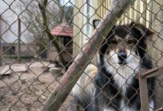 Perro detrás de la cerca Fotografía de archivo