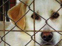 Perro detrás de una cerca imágenes de archivo libres de regalías