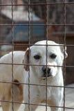 Perro detrás de una cerca del hierro Imagen de archivo libre de regalías
