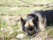 Perro detrás del alambre de púas Imagenes de archivo
