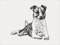perro dibujado mano del retrato, ejemplo del vector Foto de archivo