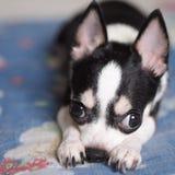 Perro disimulado foto de archivo