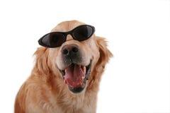 Perro divertido imagen de archivo
