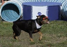 Perro divertido Foto de archivo